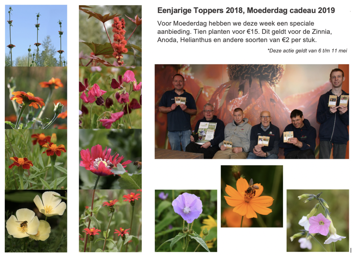 Nieuws Passiflora